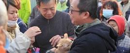 台湾地震小猫守护主人叫声唤来救援