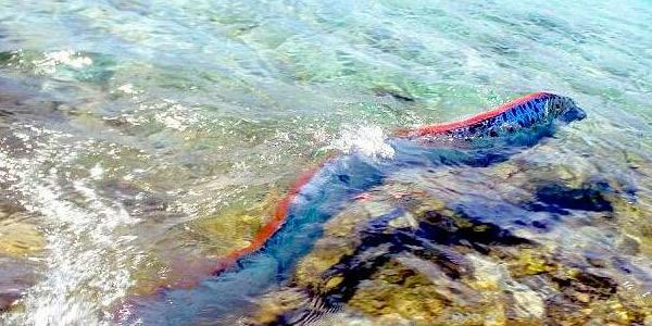 海中发现神秘巨型生物长度可达9米