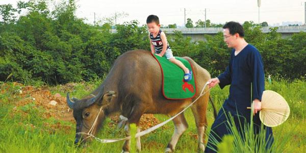 个性 父亲痴迷国学竟牵牛送儿上学