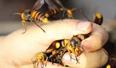两兄弟曾被毒蜂刺到晕厥 如今却靠驯蜂年入百万