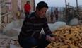 收购玉米获刑改判无罪后 他一星期又收了15万斤