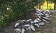 鱼塘13000斤鱼一夜离奇死亡 一个瓶盖引起塘主怀疑